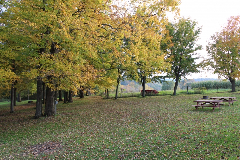 Campsites in the Fall